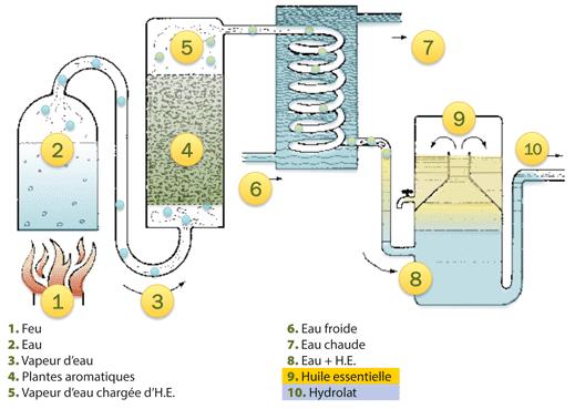 schéma expliquant le procédé de distillation des huiles essentielles