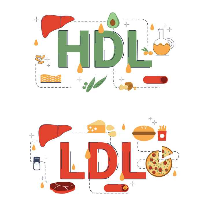 infographie cholestérol HDL LDL