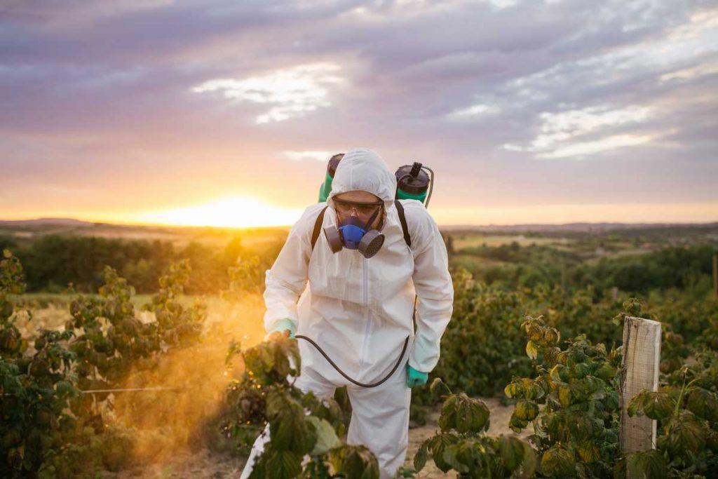 homme pulvérisant des pesticides