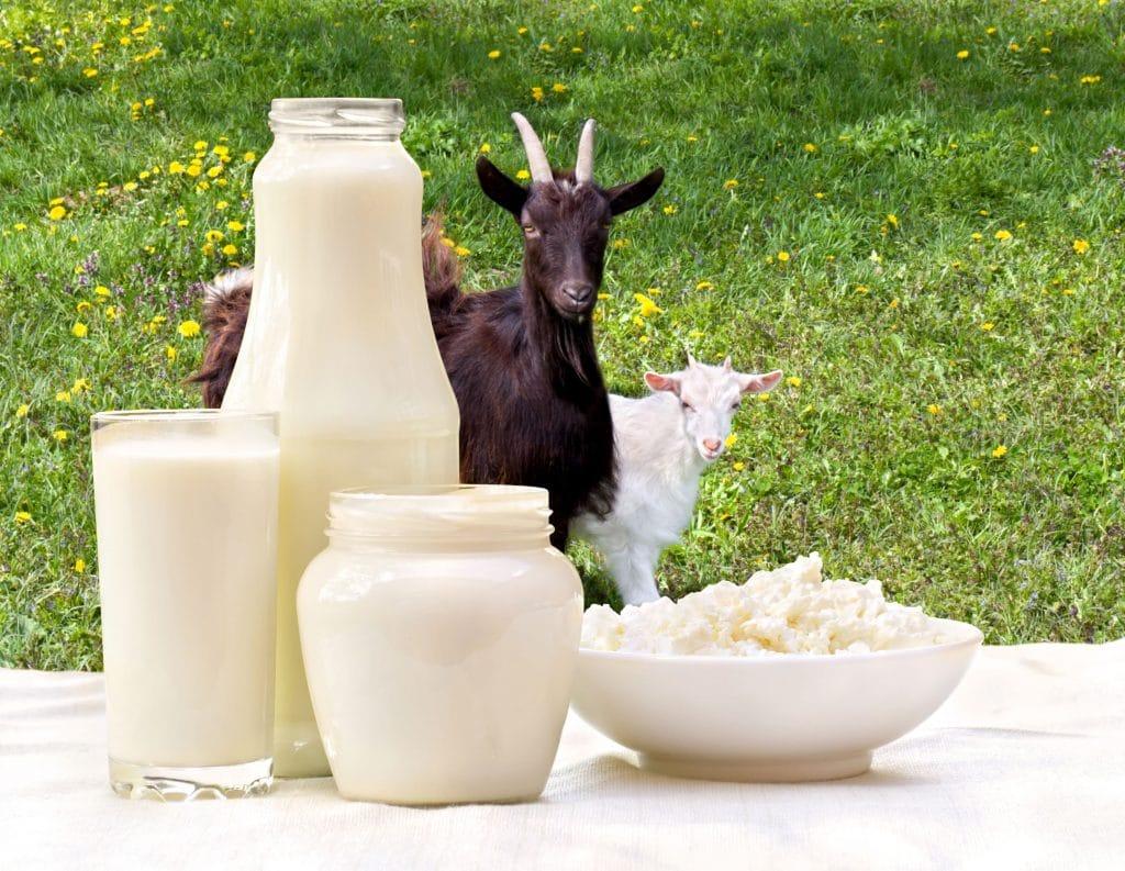 produit-laitier-lait de chèvre