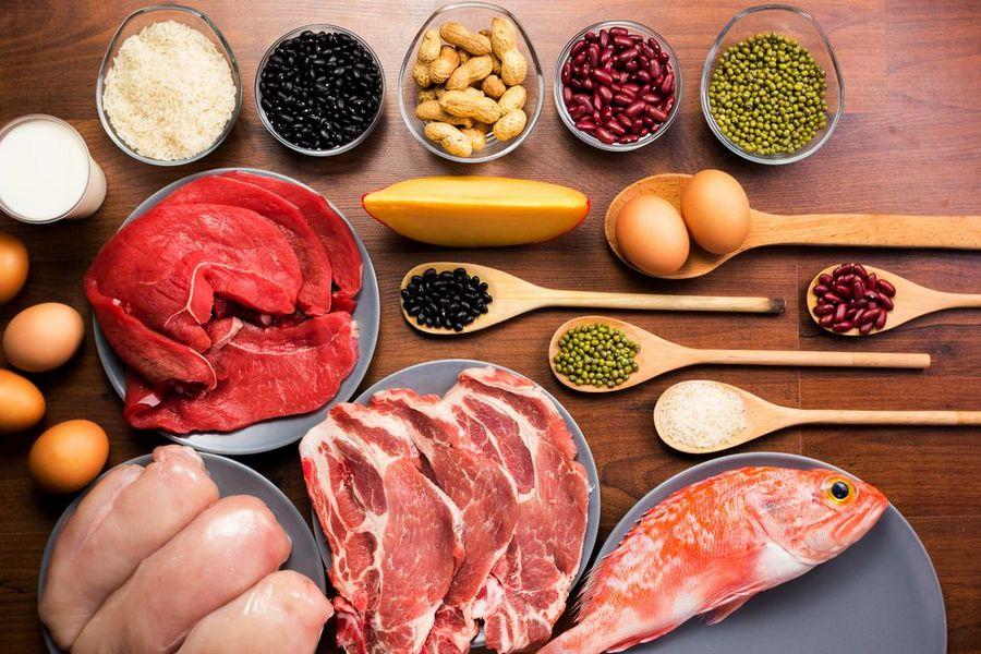 différentes sources de protéines